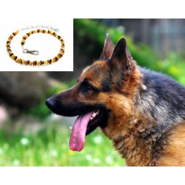 Raw baltic amber necklace/collar for dog.